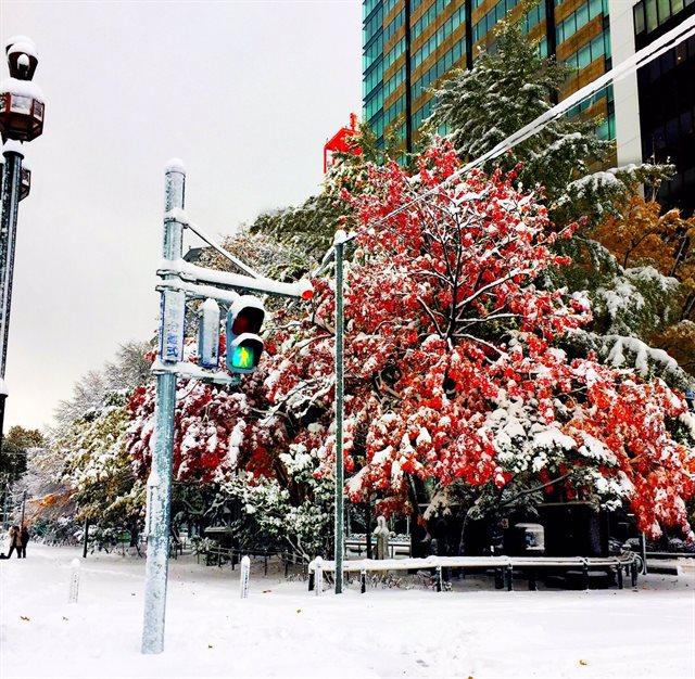 北海道の紅葉と雪