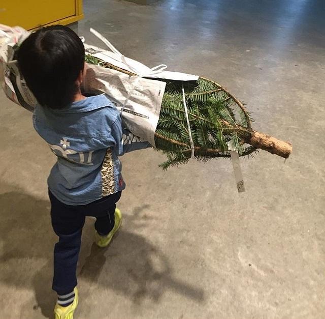 IKEAもみの木